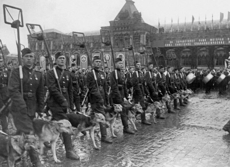 Собаки на фронтах Великой Отечественной войны