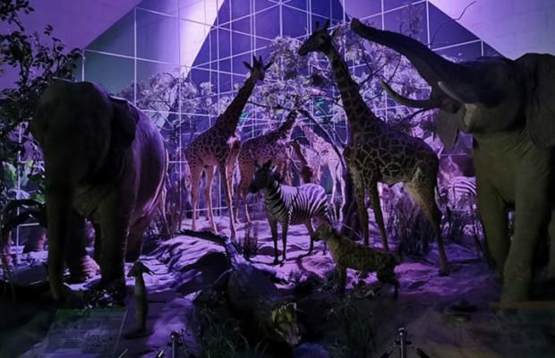 Ночь музеев в режиме онлайн: Что смотреть?