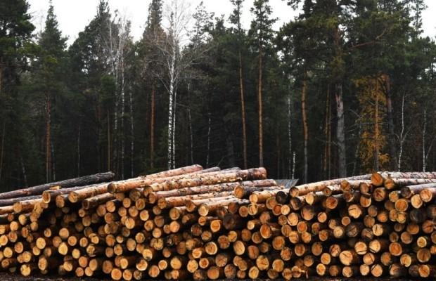 Российские леса возьмет под контроль искусственный интеллект